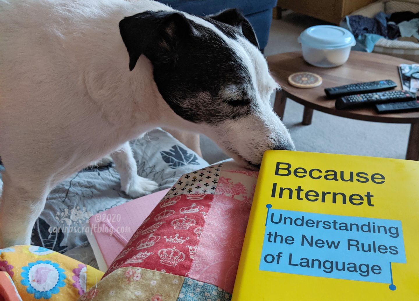 Dog sniffing the yellow cover of Because Internet.