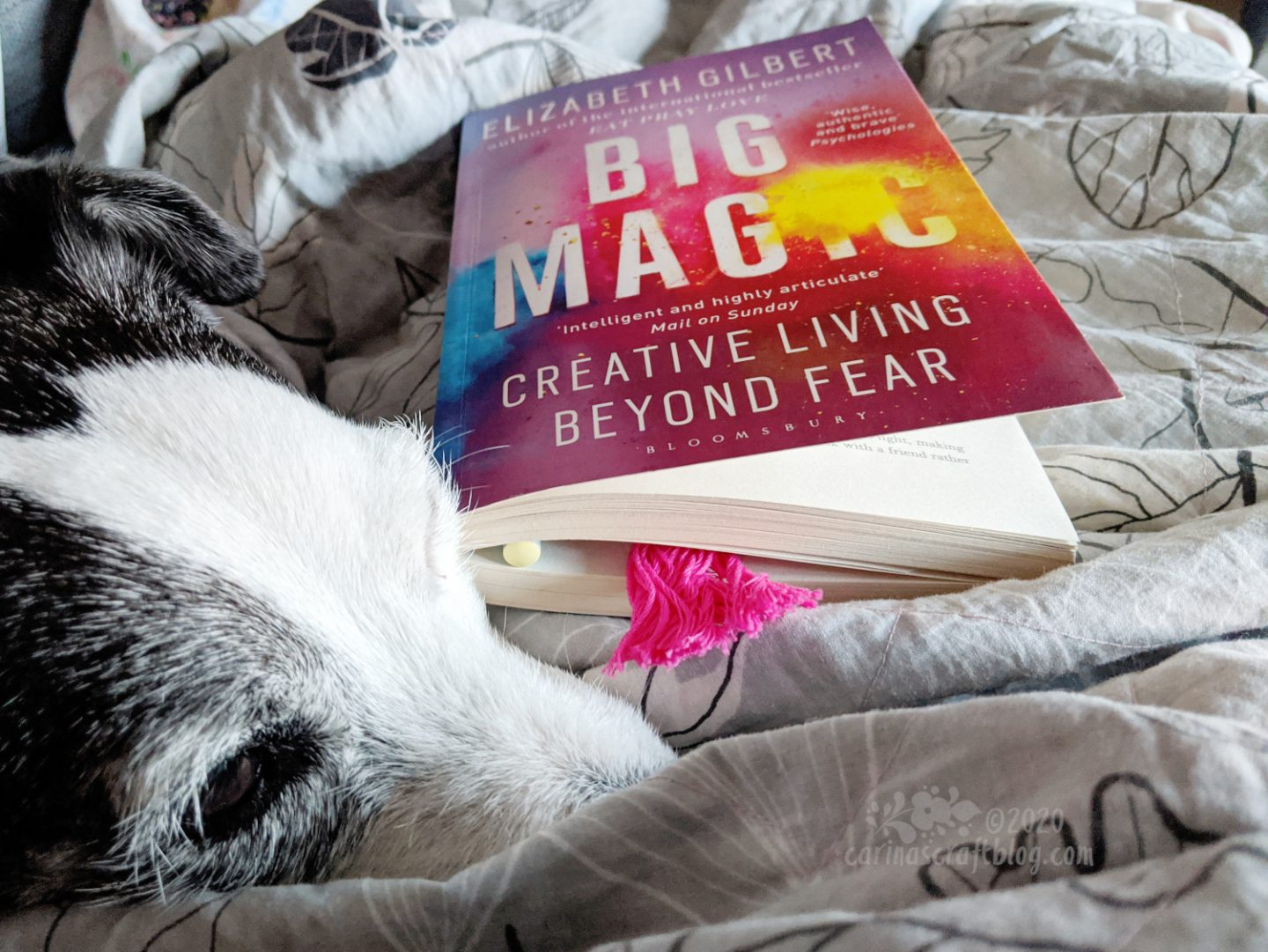 Book Big Magic next to dog